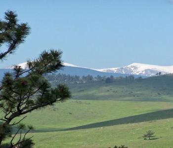 Image Argenta Alpacas